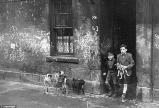 gorbalsdogs1948