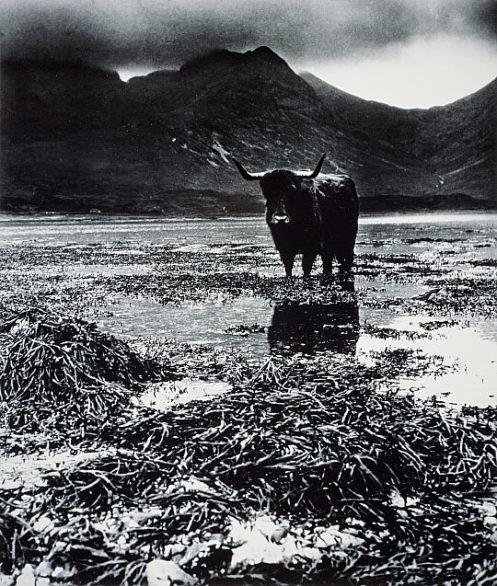 skyebull 1947