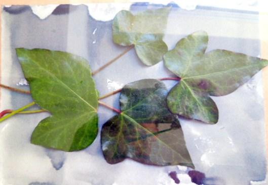 leafphotogram1