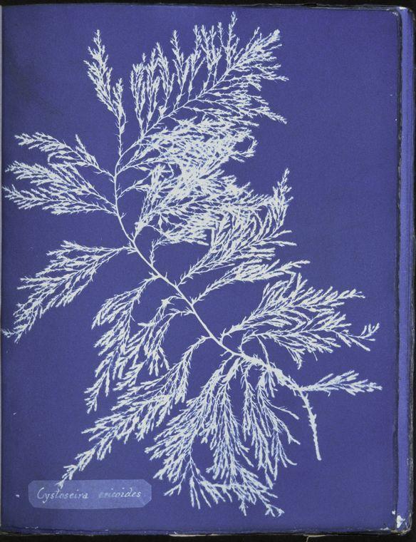 annaatkinsnn1843